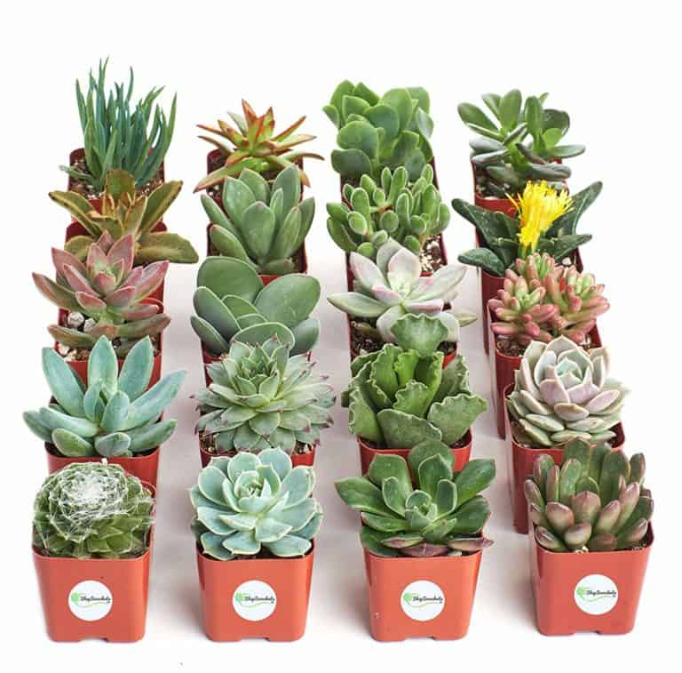 live plants mom gifts