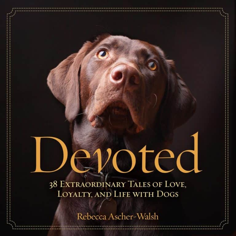 "heartwarming gifts for dog mom: gift book ""Devoted: 38 Extraordinary Tales of Love, Loyalty, and Life With Dogs"""