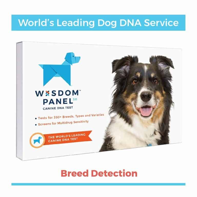 dog mom gifts: canine DNA test kit