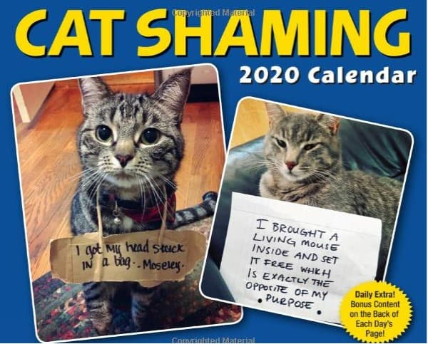 gifts for cat lovers - cat shaming calendar
