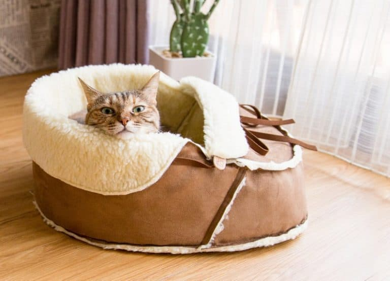 presents for cats - sherpa moccasin cat bed