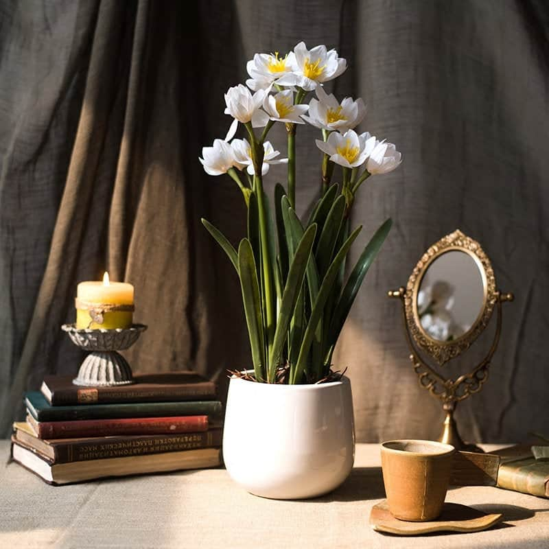 10th anniversary flower gift: real touch daffodil bonsai