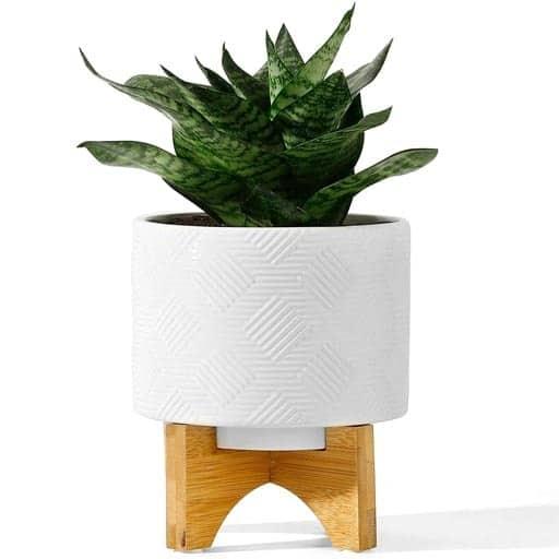 Ceramic Planter Indoor