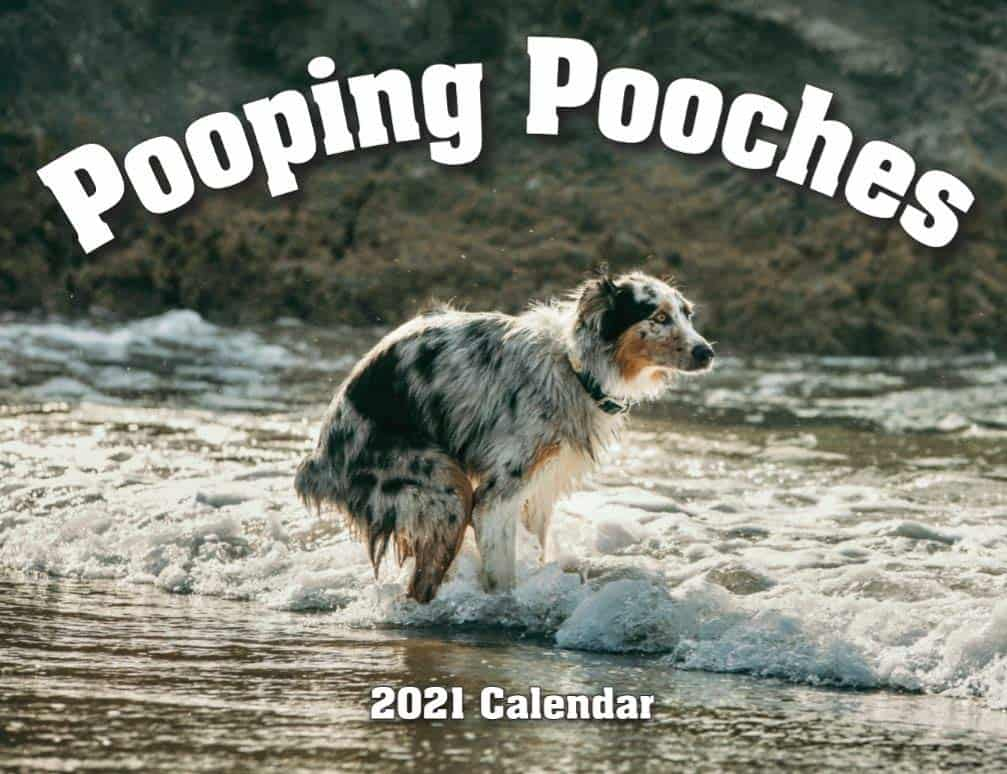 white elephant gifts: pooping pooches 2021 calendar