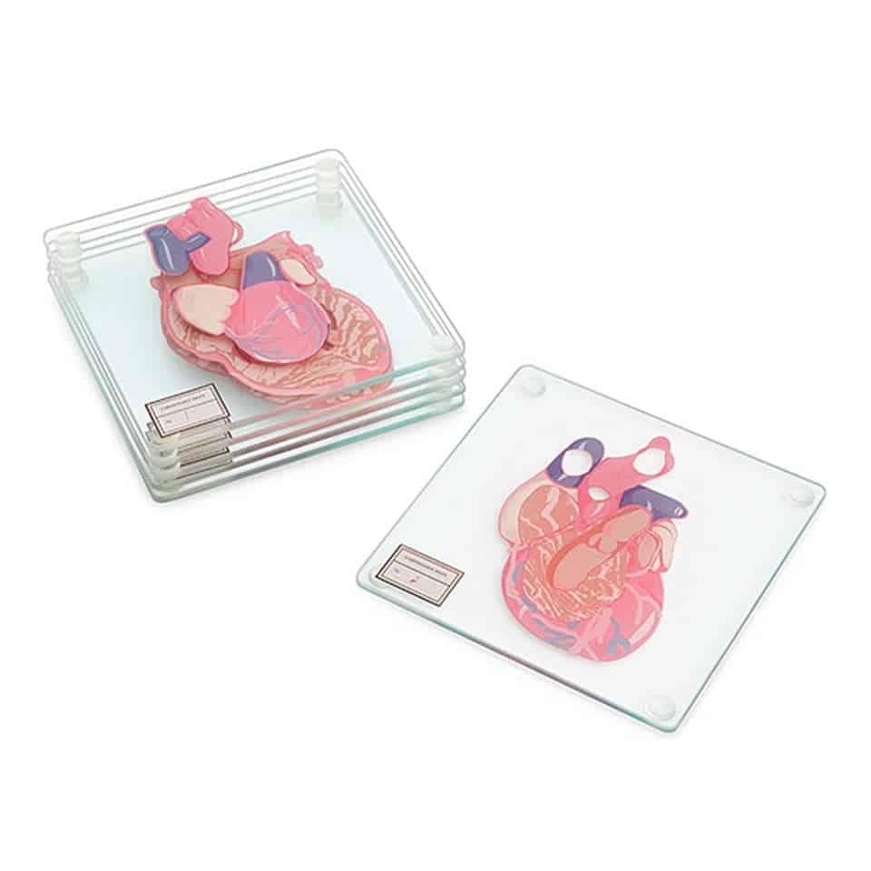 Heart Specimen Coasters - gifts for medical school graduates