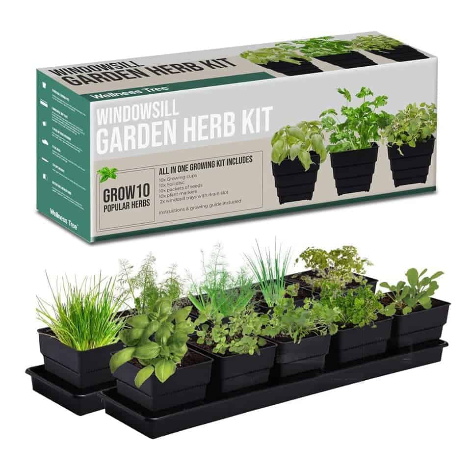 Herb Growing Kit - valentines gifts