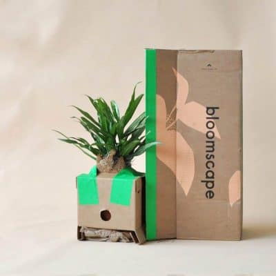 meaningful gifts for mom - A Plant from Bloomscape